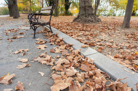 Autumn park path covered with fallen sycamore leaves. Imagens