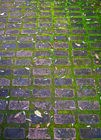 Cobblestone pavement and moss on park in Belo Horizonte, Brazil Stok Fotoğraf