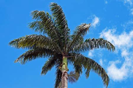 Palm tree and blue sky, Ouro Preto, Brazil