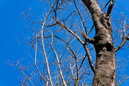 Dead tree and blue sky, Rio, Brazil