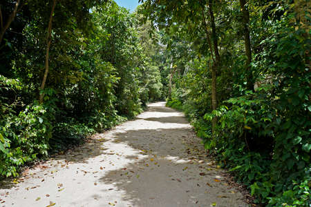 Trail at