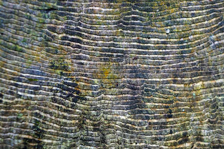 Texture in cut tree trunk (detail)
