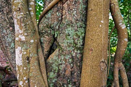 Tree trunk with lichen, Rio