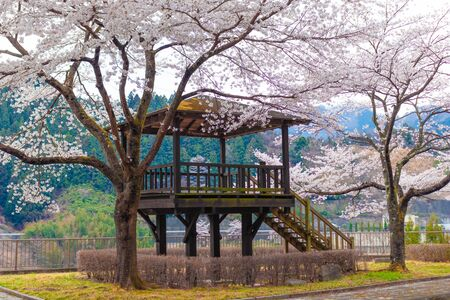 The Sakura Flower is typical of Japan and also a national symbol.