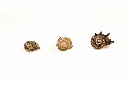 beachcombing: 3 shells closeups from ocean Stock Photo