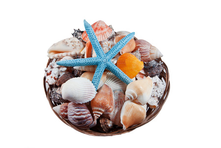 beachcombing: starfish and shell decoration on white background