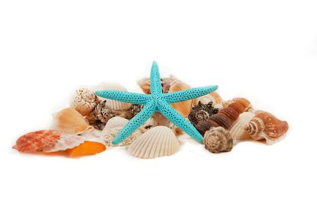 beachcombing: starfish and shell decoration Stock Photo