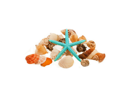 beachcombing: Starfish surrounded by shells