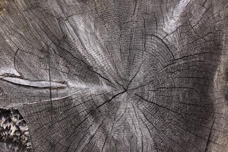 centered: detail of tree rings - black wood, centered