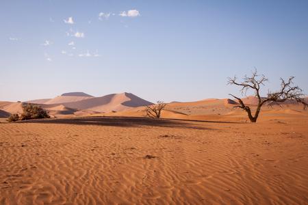 arboles secos: Dunas con �rboles muertos en el desierto de Namib, Namibia Foto de archivo