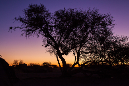 namib: Sunset over Namib Desert with Tree