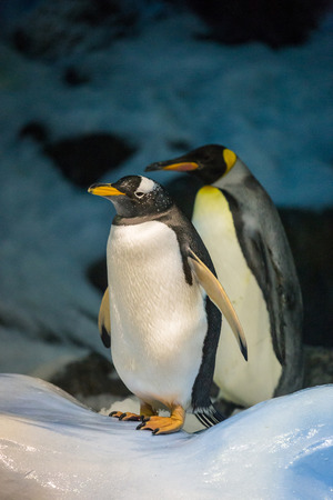 Gentoo Penguin and King Penguin standing on Ice and Snow in front of Stones and Ice.