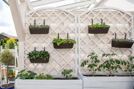 Vegetables and salad in decorative vertical garden and raised bed.