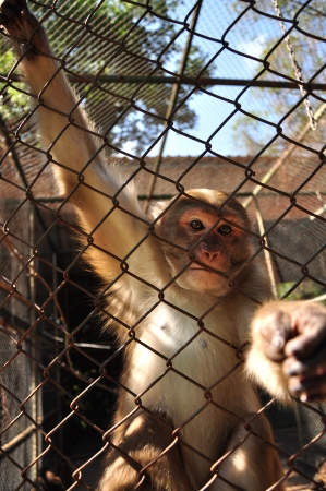 Monkey reaching through cage for food  photo