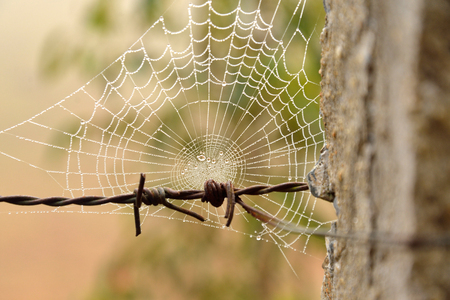 spiders web: Spiders web on barbed wire
