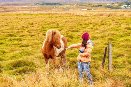 A women tourist enjoy to play with Icelandic horse.