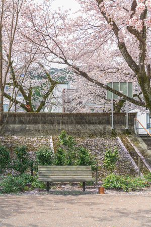 The relax time the bench for sitting in the garden with beautiful of cherry blossom in full bloom. Springtime in Gero, Japan Reklamní fotografie