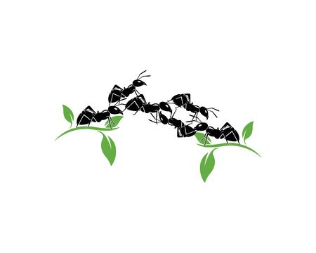 Disegno dell'illustrazione di vettore del modello di logo della formica
