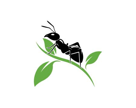 Ant Logo template vector illustration design Illustration