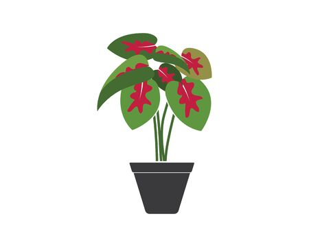 caladium plant in pot icon logo vector illustration design template