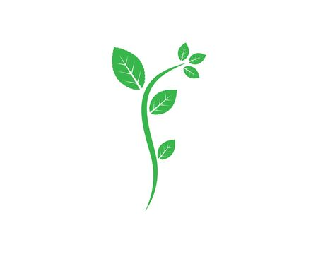 mint leaf illustration vector template design 版權商用圖片 - 134536087