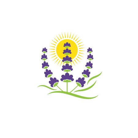 sun lavender flower vector illustration design template 向量圖像