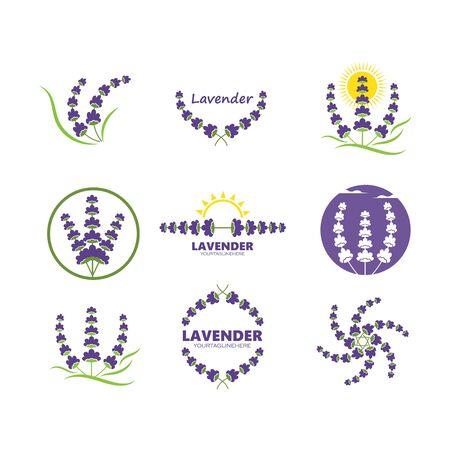 lavender flower vector illustration design template