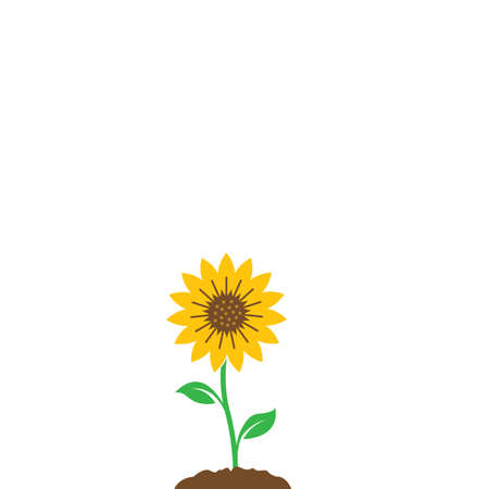 Sunflower icon vector illustration design template web Illustration