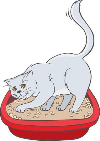 plastico pet: Gato en la bandeja