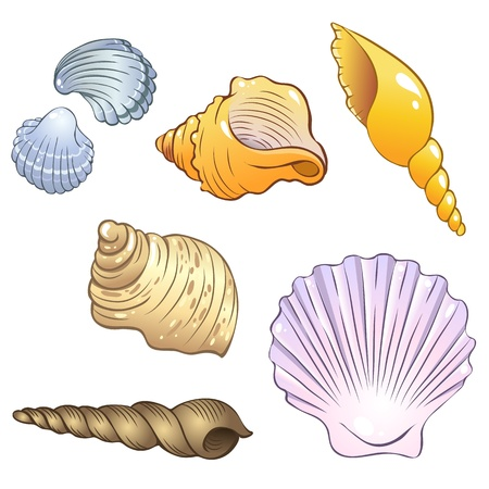 Set of illustrations in a cartoon style  sea shells Illustration