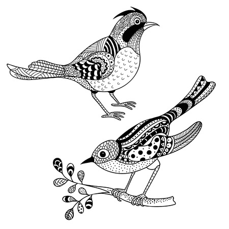 flora fauna: Black and white vector illustration: two ornate birds