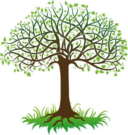 feuille arbre: Arbre vert sur un fond blanc Illustration