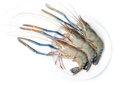 Close up Fresh shrimp and long arm isolated on white background. The giant river prawn on white background. Grilled giant river prawns are popular Thai cuisine.