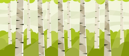 Birch grove at noon. Birch tree trunks  イラスト・ベクター素材