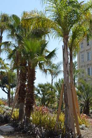 french riviera: Nice French Riviera Palm Trees Seaside