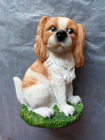 man's best friend: Dog is mans best friend Stock Photo