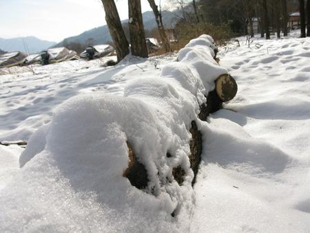 riverside county: South Korea Nami Island winter