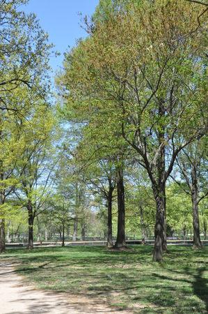 greenery: Greenery Park
