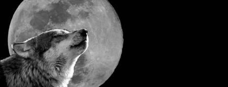 Wolf with a moon in background