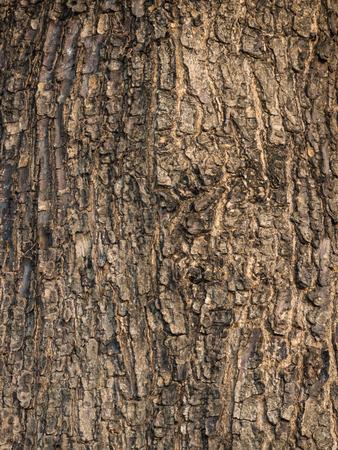 textured: Bark textured Stock Photo