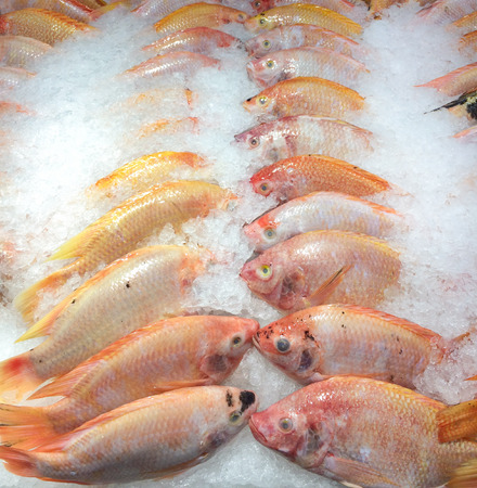 ices: Fresh Red Tilapia Fishes chilled on cold ices and order in a straight line for keeping freshness as a group on shelf in seafood  market