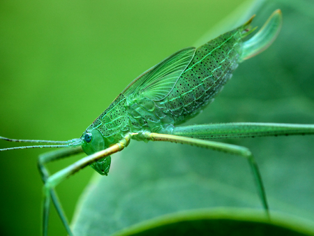long-horned grasshopper Stock Photo