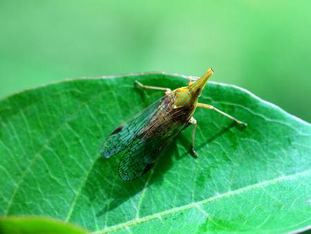 cicada: Al igual que la cera cigarra Foto de archivo