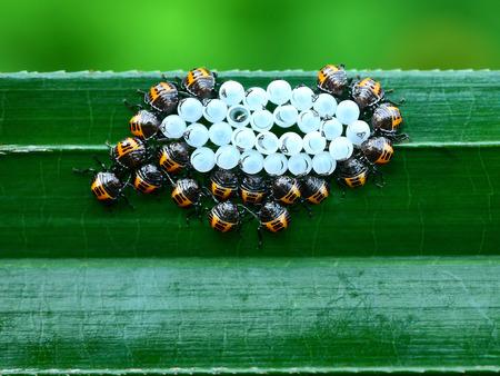 get together: Get together the bug
