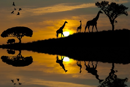 african safari: Safari in Africa. Silhouette of wild animals reflection in water.  Stock Photo