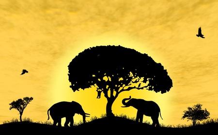 birds desert: Safari in Africa. Silhouette of wild animals