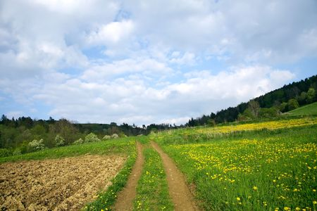 Landscape with green meadow Stock Photo - 4484068