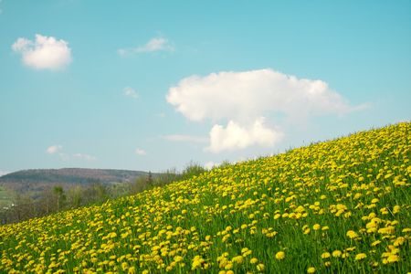 Landscape with green meadow Stock Photo - 4484049