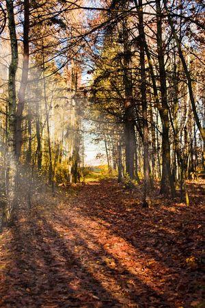 Autumn in the park Stock Photo - 6032120
