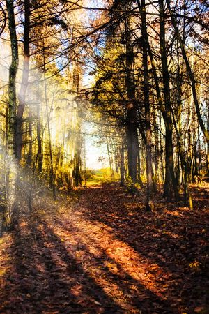 Sunbeams pour into the autumn forest Stock Photo - 6032141